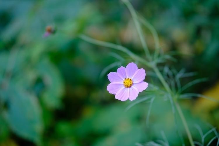 Pretty - photography, naturephotography - berryphillips | ello