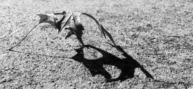 leaf, concrete - exet | ello