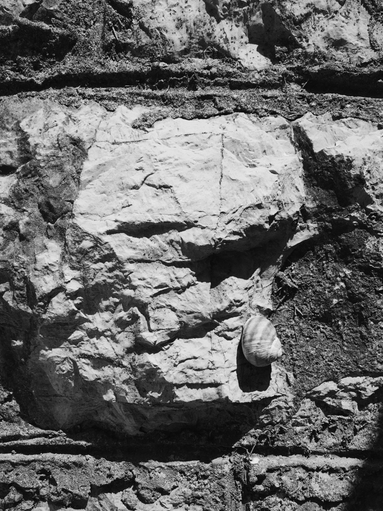 rock, wall, snail - exet | ello