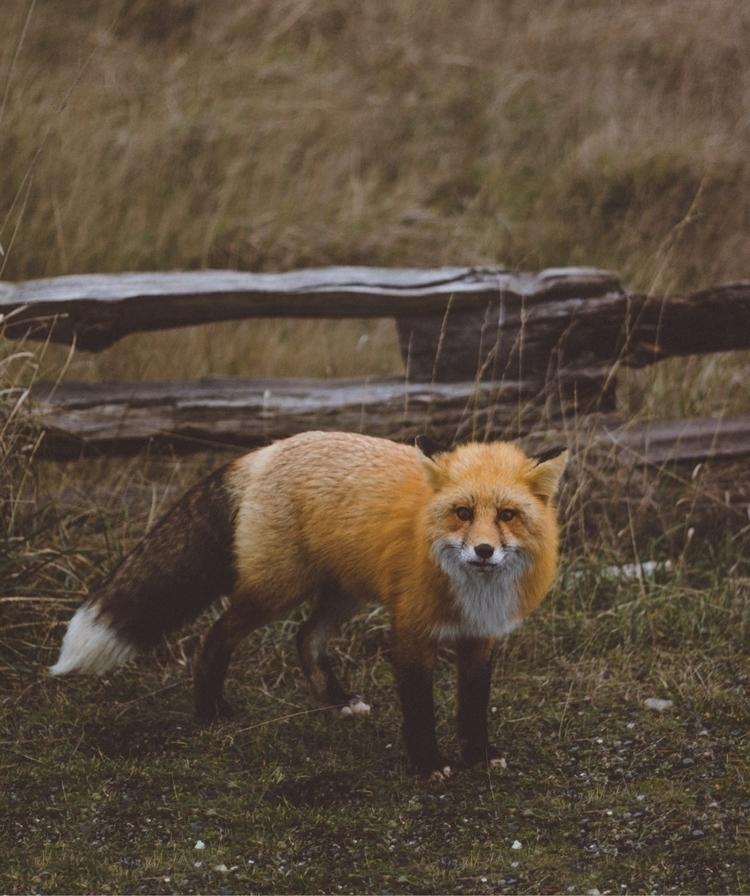 Friendly fox - 206vibes | ello