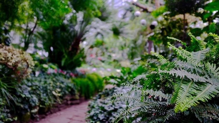 Allan Gardens Conservatory, Tor - visual_architecturism   ello