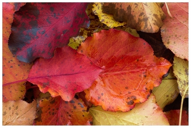 Fall colors - fall, leaves, fallcolors - kudzupatch | ello