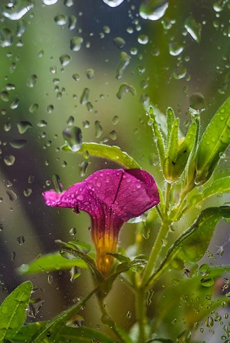 raindrops - melissapelkey | ello