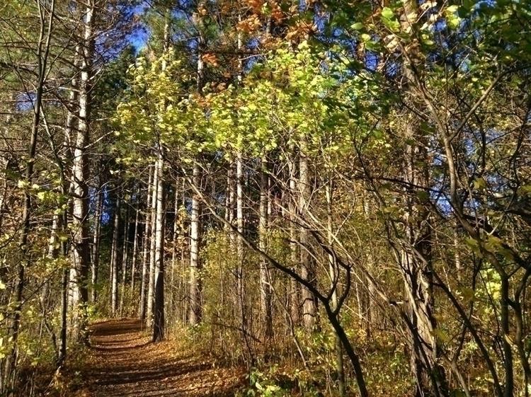 Pine grove - photo, nature - dispel | ello