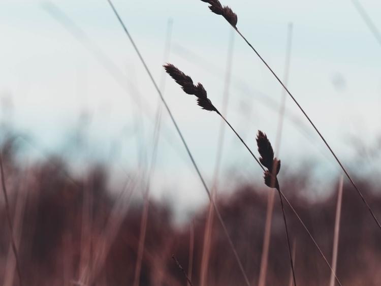Grass - photography, grass, photo - davidboca | ello