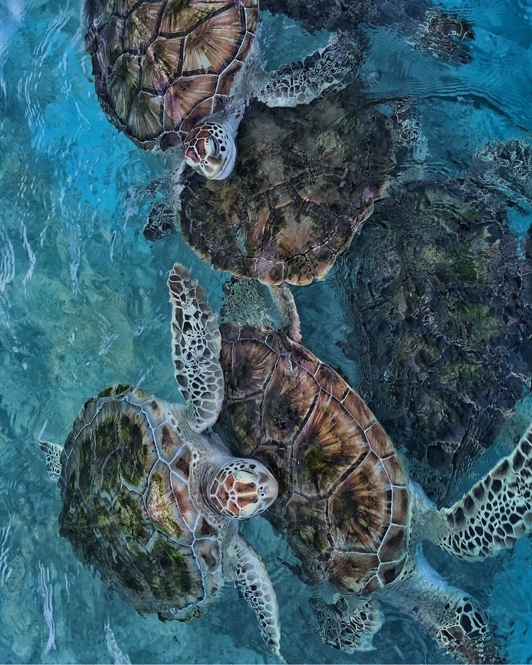 Turtles, mate - ocean, peace, turtles - finsphotos | ello