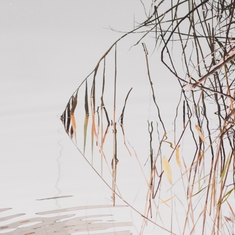 Reflected reeds - water, grass, nature - andreigrigorev | ello