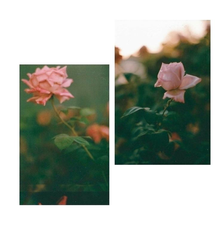 Roses room — 35mm film - pinkladyabble | ello