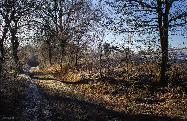 Cold day 2017 7 December - Denmark - jan_sahl | ello