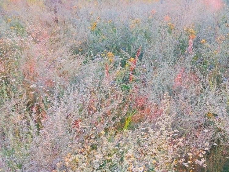 Herbage - grass, plants, flowers - andreigrigorev | ello
