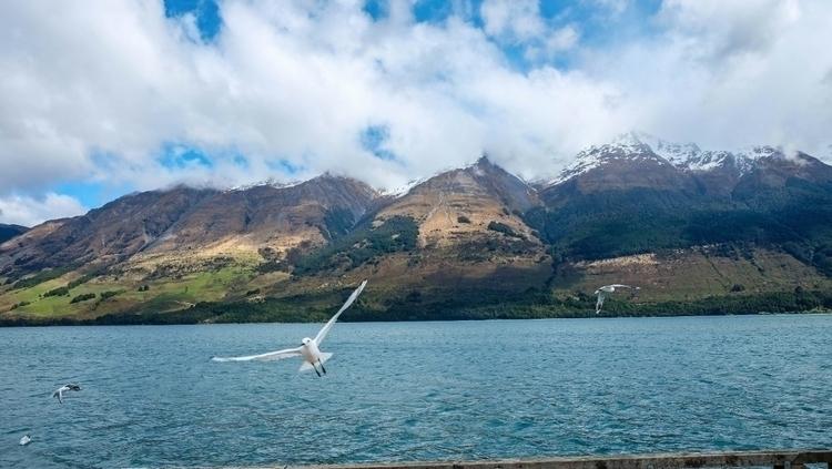 Zealand - ello, photography - winniepoonws | ello