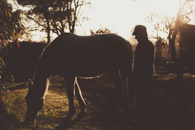 vacations - horse, teacher, morning - melissadupuch-photography | ello