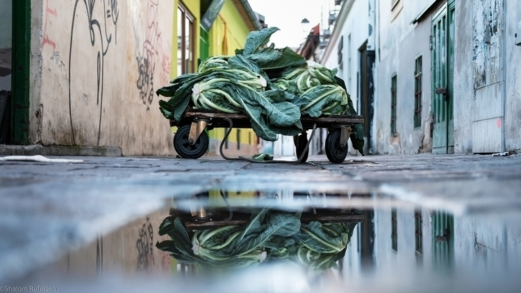 dead cabbage market, Košice, Sl - shutterstalk | ello