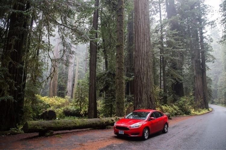 Road tripping Redwoods - roadtrip - wolnicat | ello