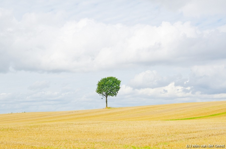 Lonely Tree Denmark Scene - Sky - wimvandergeest | ello