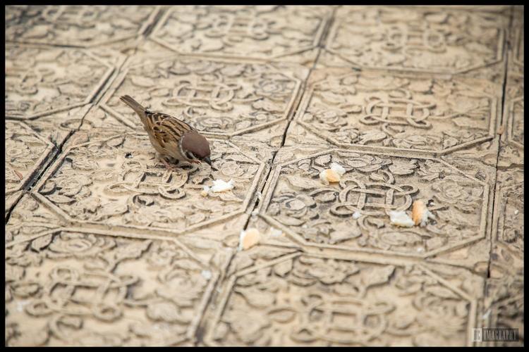 HongKong, LaiChiKok, Sparrow - dcmiracle | ello