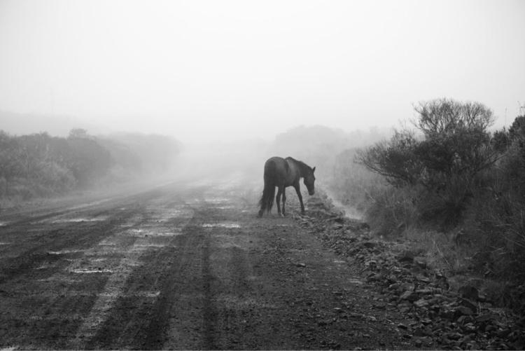 Southern Brazil- wild horse - brazil - yasmineomari | ello