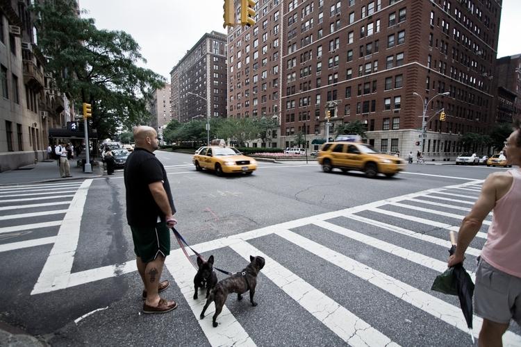 Walking dogs - eclipse011 | ello