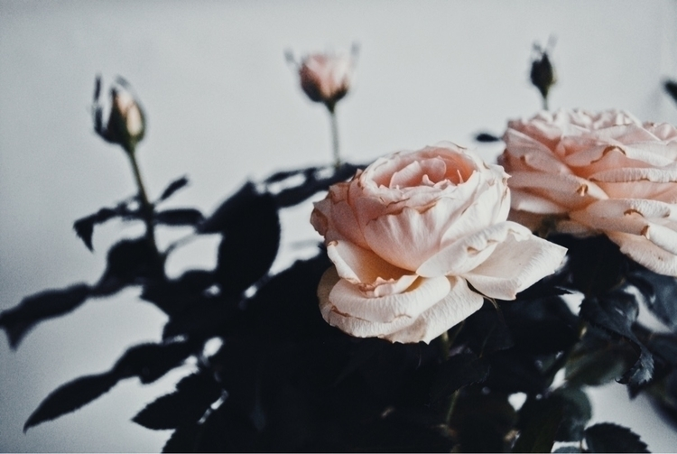 RG100 display - photography, roses - agzed | ello