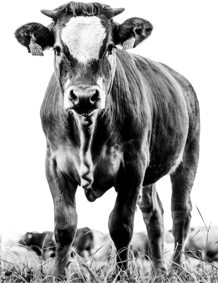Calf highkey - hannerius | ello
