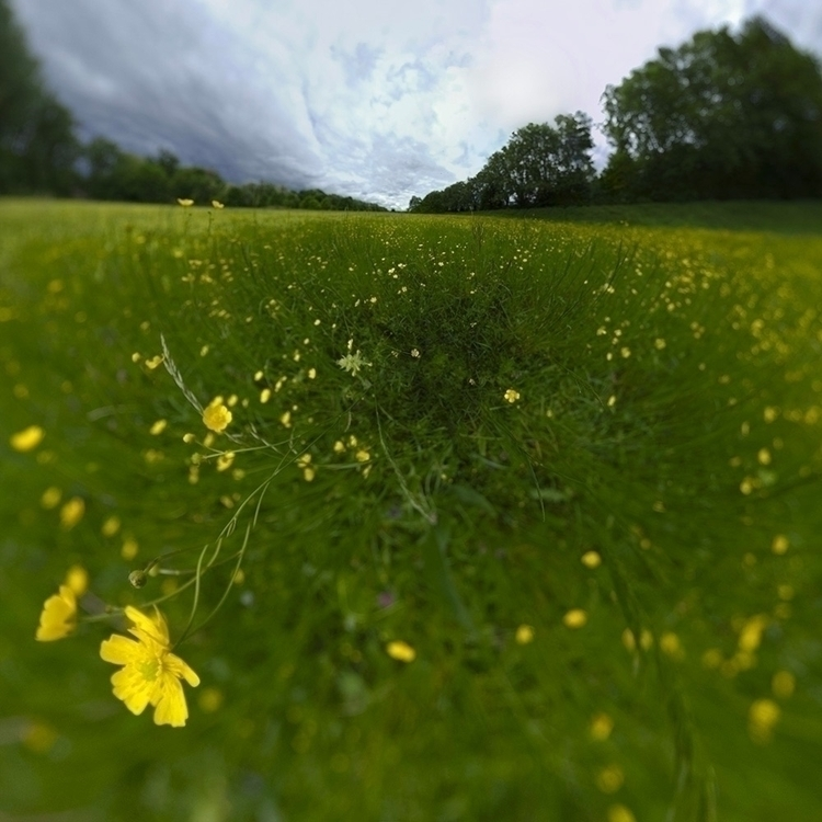 prairie, meadow - nature - pixotrope | ello