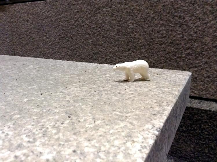 Polar bear - photography - dispel | ello
