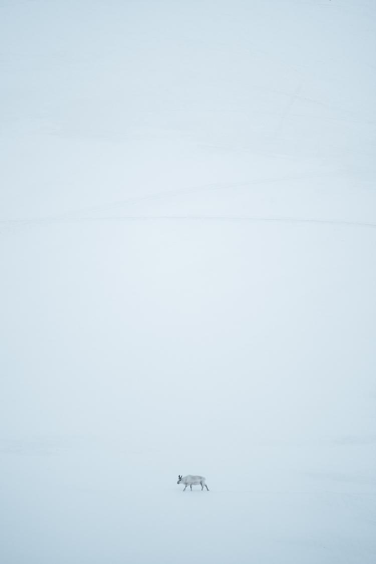 Minimal arctic - svalbard, travel - sturmsucht | ello