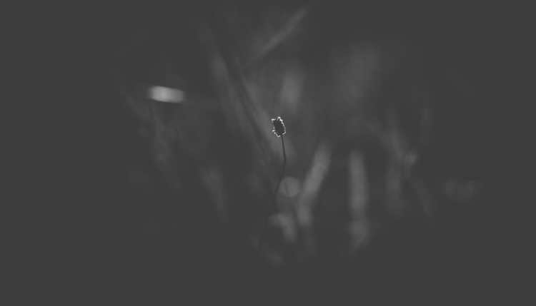 ello, photography, blackandwhite - panioan | ello