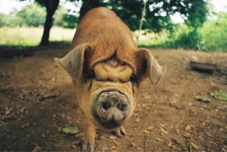 pig mud - simongwen | ello