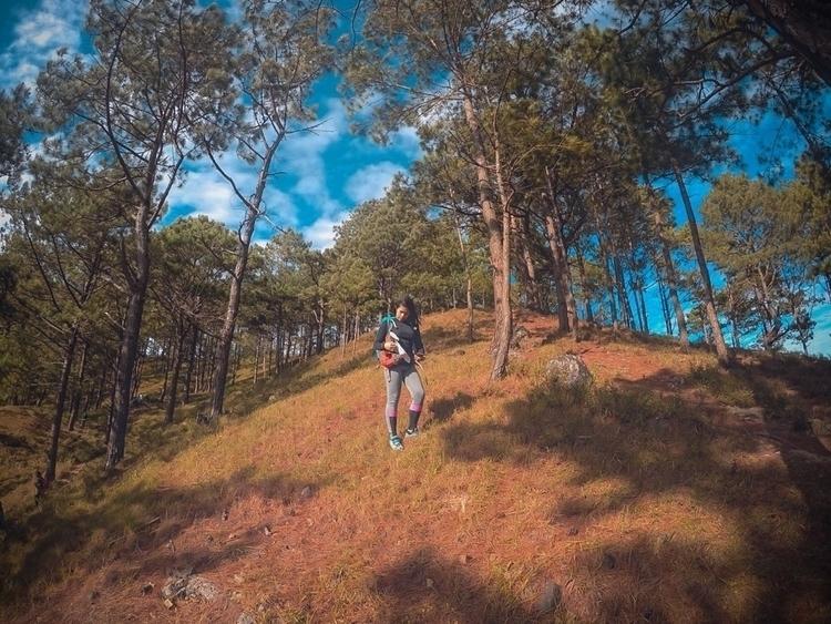 woods - hiking, climbing, camping - mikaypotpot | ello