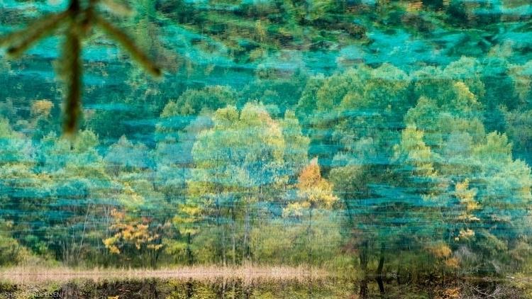 Reflection Pond, hundreds Jiuzh - shutterstalk | ello