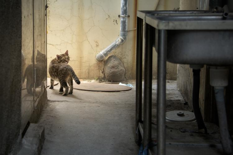 Alley Cat - street_storyteling, streetphoto - davewu | ello