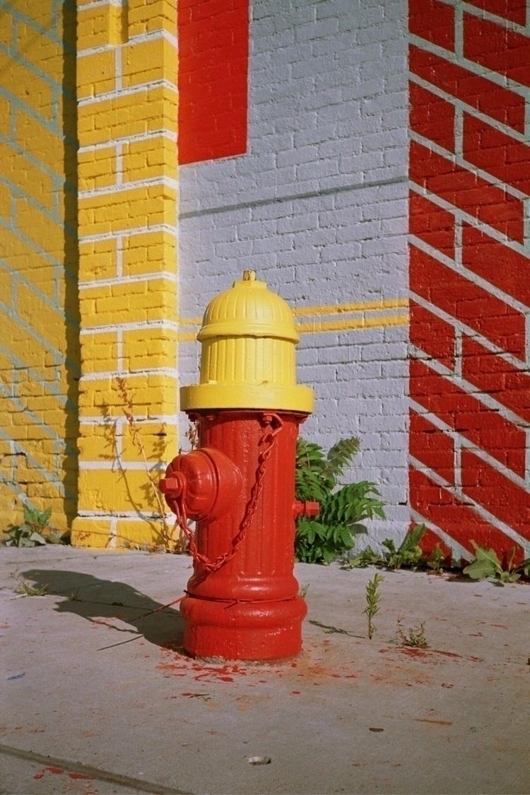 fire honey check - film, 35mm, disposable - zelmanski | ello