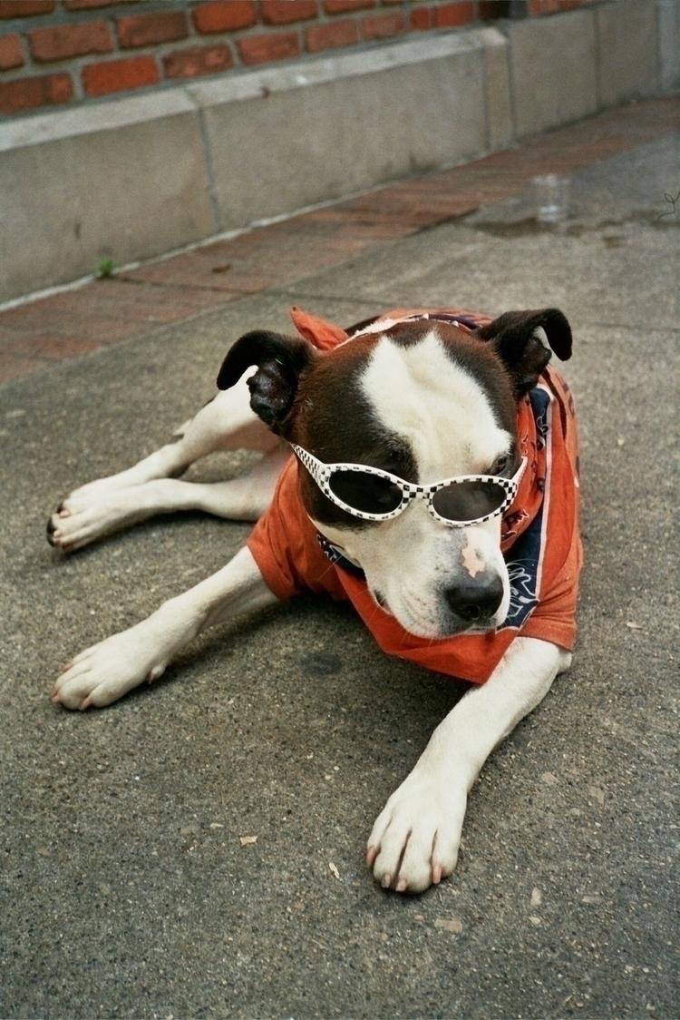 stay cool, dawg - 35mm, film, dogs - zelmanski | ello