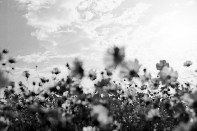 blackandwhite, taiwan, flower - kou617 | ello