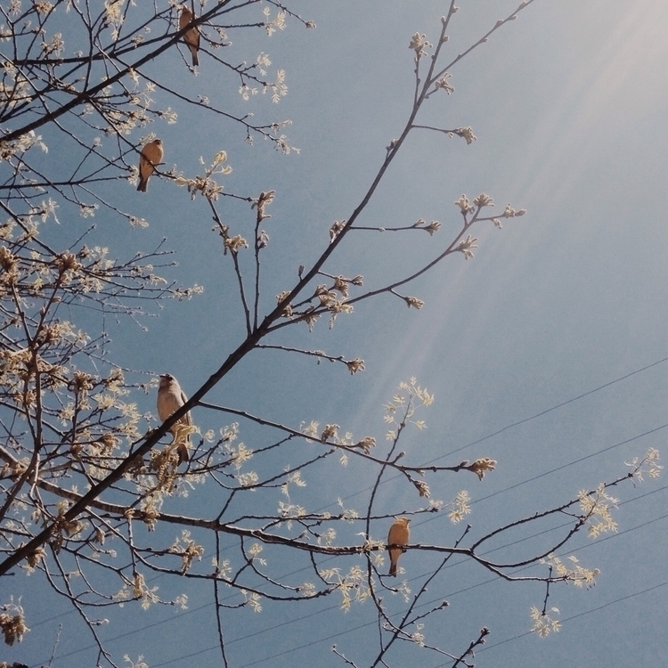 Free birds - photography, ello, nature - thulios | ello