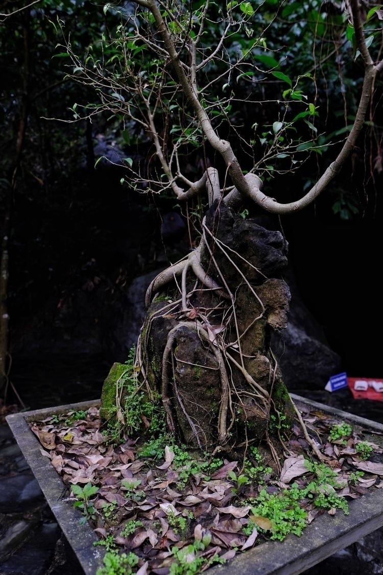 Bonsai vor einem Tempel bei Pho - weltfarben | ello