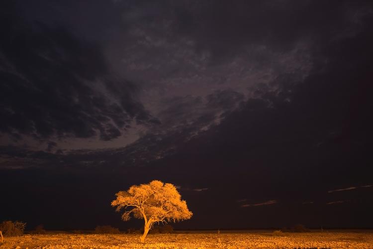 lonely acacia tree floodlit wat - henao_photography | ello