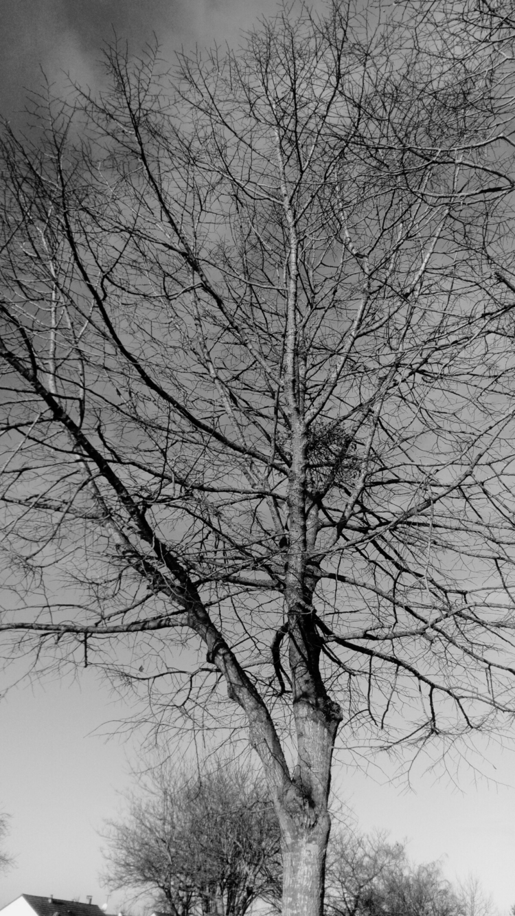 Conection Mathieu Dubois photog - rainermaria | ello