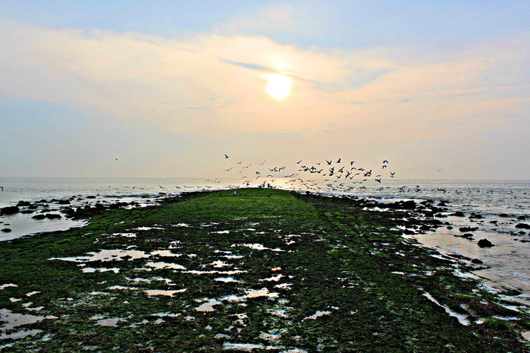 Beautiful Northsea beach... day - seabreezzze | ello