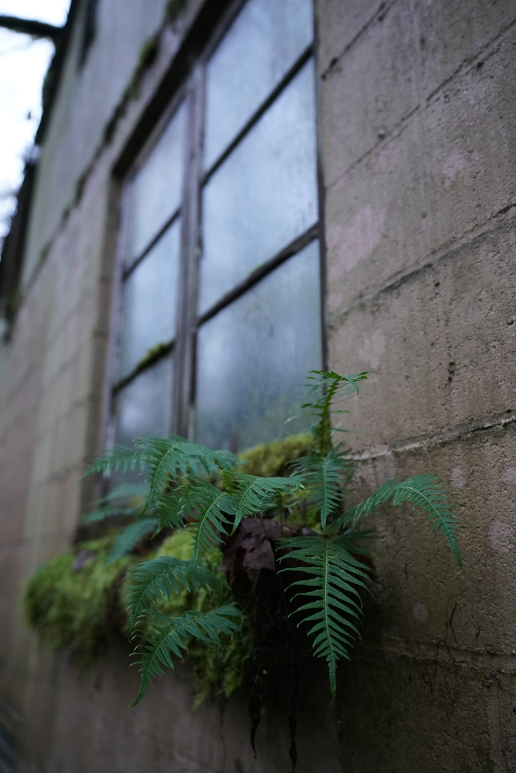 Plants moss find place grow bui - cokes | ello
