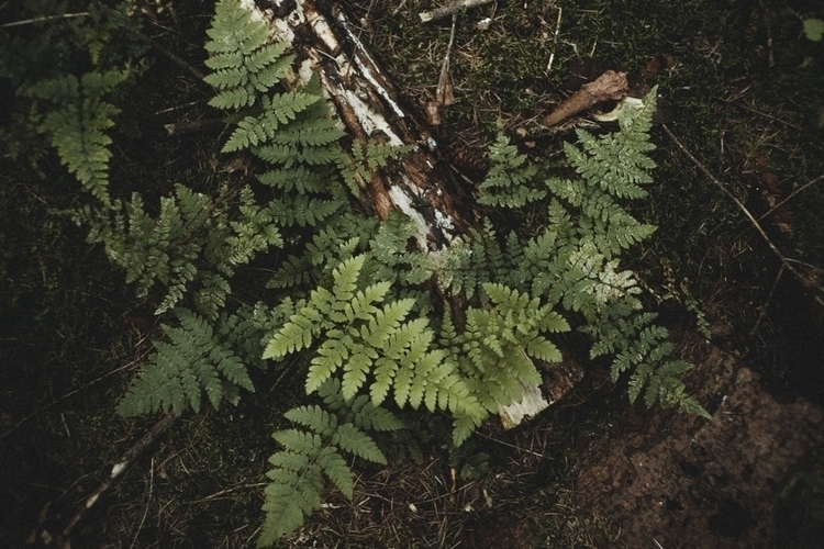 details - nature, photography, plants - pablo_caballero_ | ello