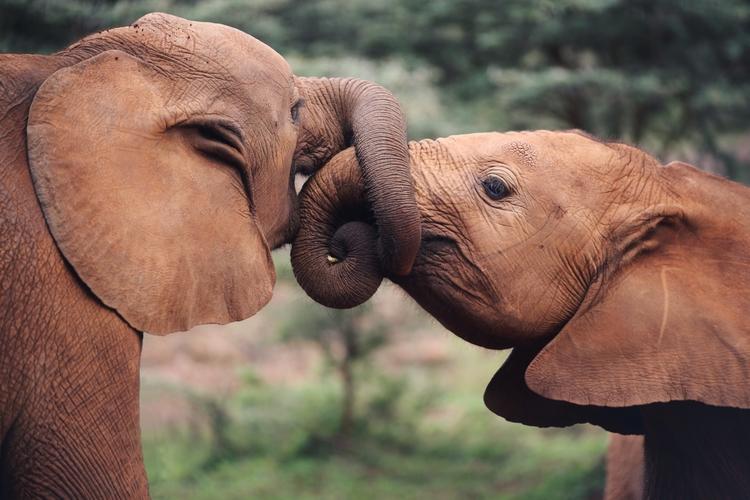 baby elephants Nairobi - ahowc | ello