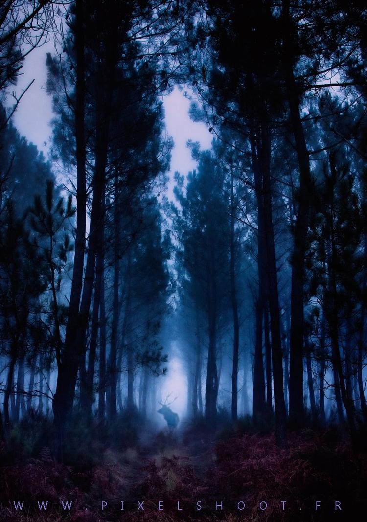 Forêt de Naujac sur mer en cage - pixelshoot | ello