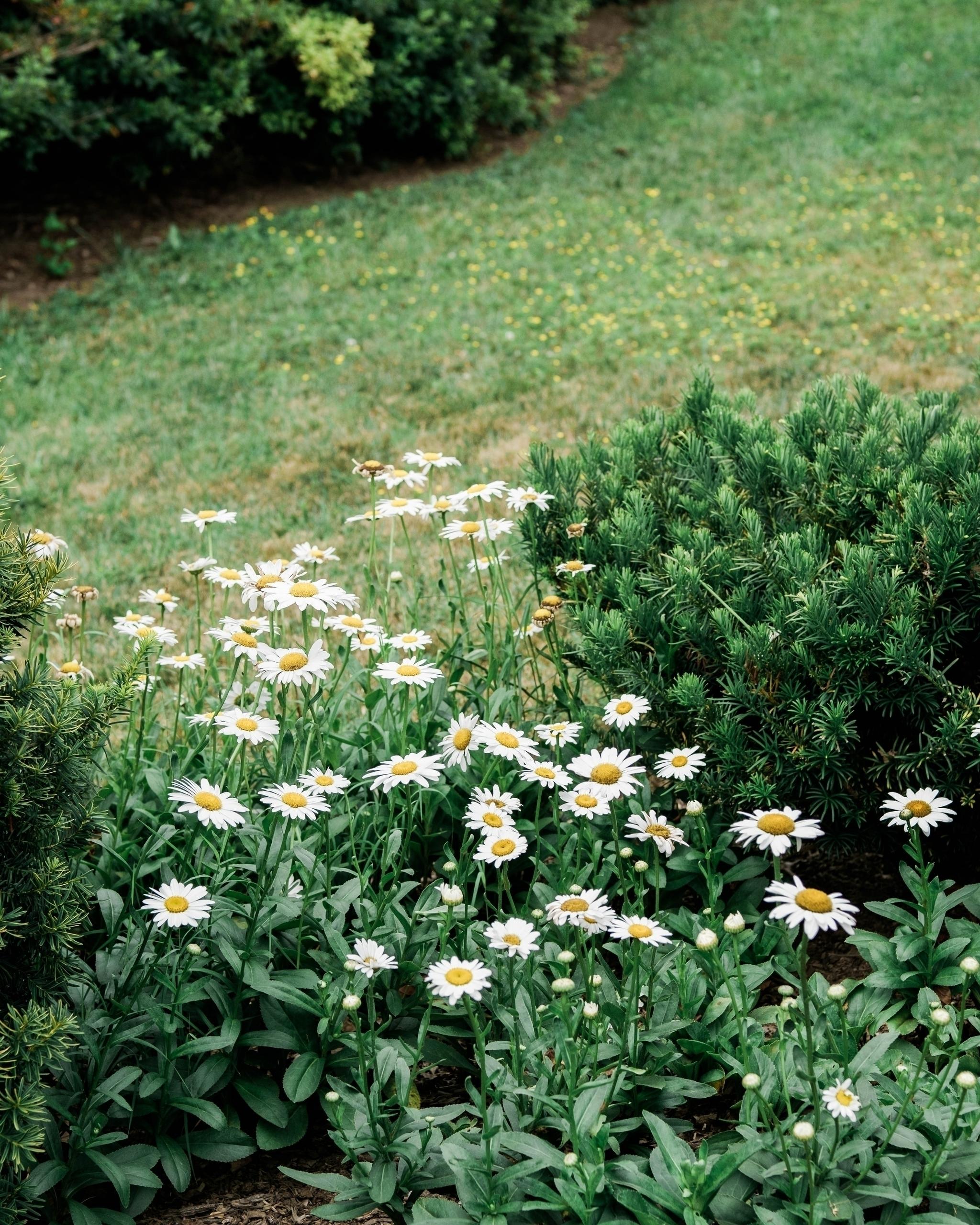 Missing spring - springfloral, springcolors - eddiepearson   ello