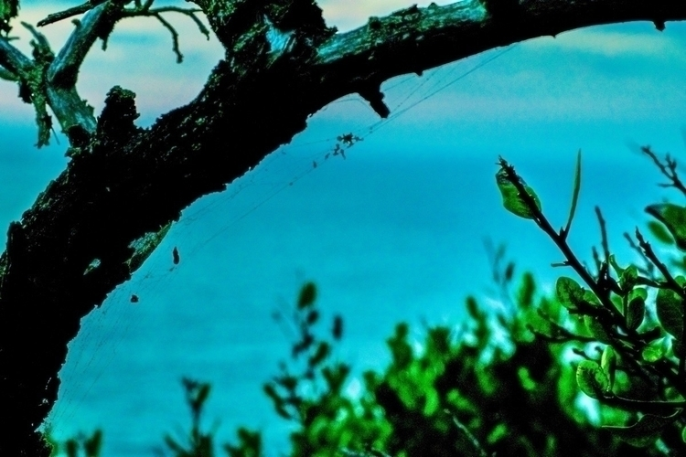 photography, distort, nature - kg00ds   ello