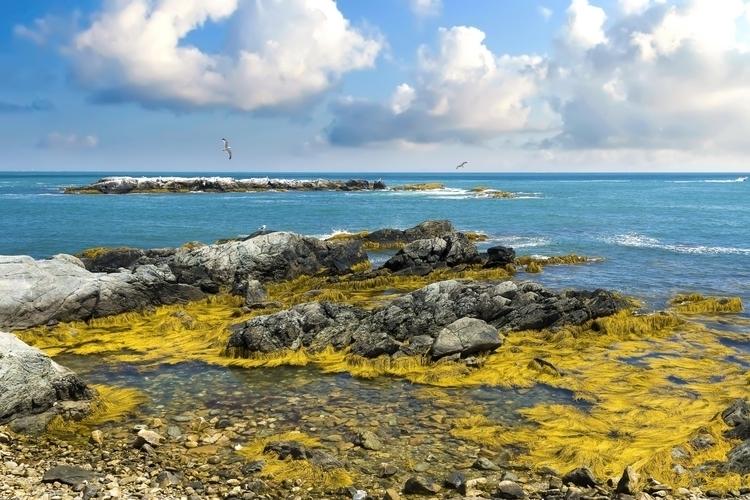 nature, sea, seaweed, rock, shore - hoovertung | ello