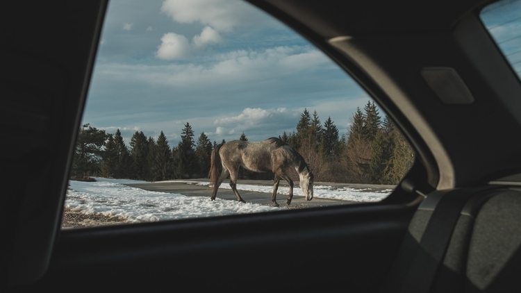 horse, horses, animals, mountains - brkatikrokodil | ello