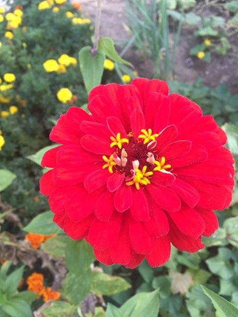 Botanical Gardens Ohio Submitte - amyelliott86 | ello
