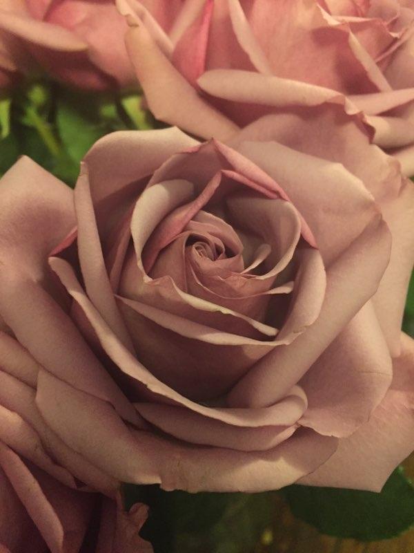 Purple Birthday Roses! Submitte - amyelliott86 | ello